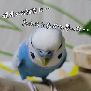 🐥塩胡椒ハピバ~🐥