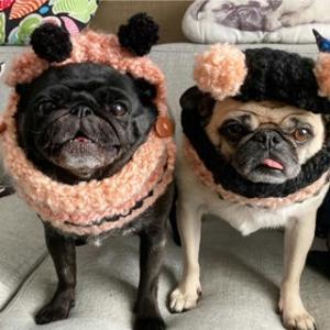 ナナジャズ用手編みスヌードをプレゼントしてもらったョ