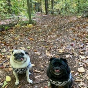 秋晴れのオフリーシュ・トレイル散歩