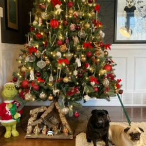 おパグ・オーナメントをクリスマスツリーに飾ったョ
