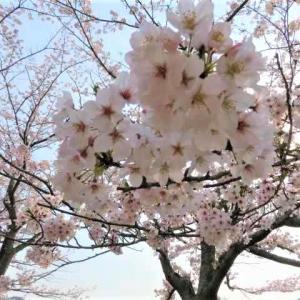 福岡県「緊急事態宣言」&ミコお腹空きまちたミャミャ🐈