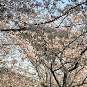 桜満開!!馬券は!?