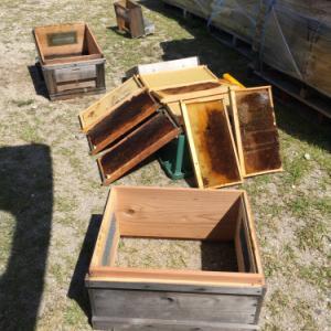 ミツバチ給餌