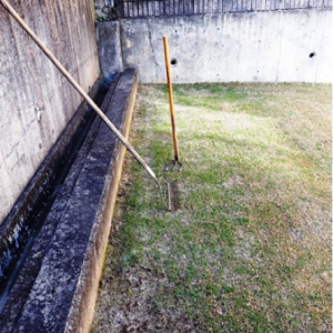 我が家の芝生 完全緑地化【リベンジ編】 part.2