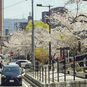 広島駅周辺の広電電車 2020-4 -②