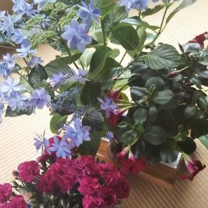 春の花がいっぱいウォーキング