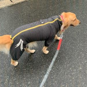 雨の朝散歩