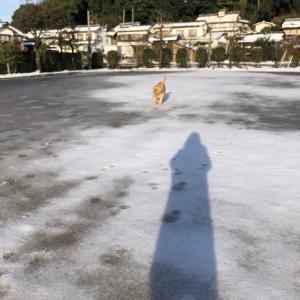 今日もブンブン散歩