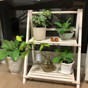 ほの香の施術部屋に植物棚を設置しました(^^)