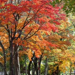 紅葉in市内の公園(´・ω・`)