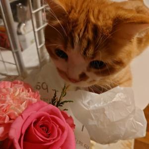 お花より好きなのは?