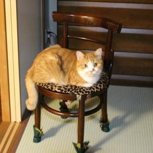 下僕2の椅子
