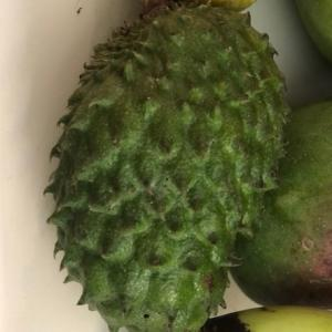 多肉植物とレアなフルーツ