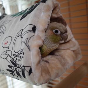 コムギは元気で~す♪ 変なご近所さん(-_-;)