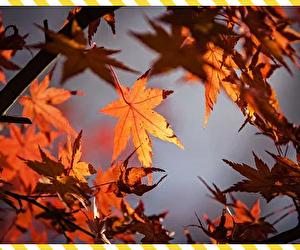 10月は行事を楽しみつつ冬を迎える準備期間と心得よ!!