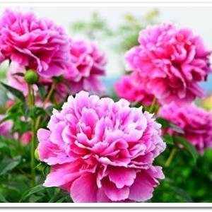 美しい女性を花に例えてみると有名な言葉ばかり