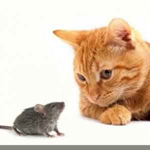 これでネコのことが少しは分かるはず