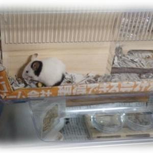 パンダマウス  5匹っぽい・・・