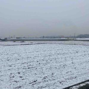 雪☃️ふってどないもこないも