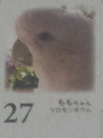 今年のカレンダーの6/27枠
