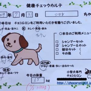 ブログ終了のお知らせ&野川散歩