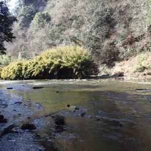『チバニアンの里』から昭和の森公園までの42km RUN