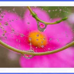 儚く滴に咲く花