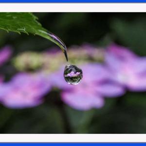 ひと滴の花