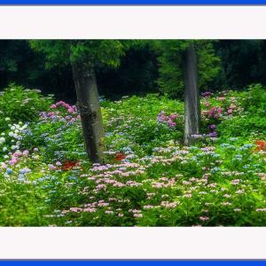 彩りの花園