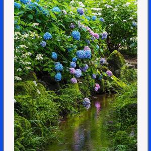 苔むす紫陽花園