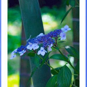 竹林の花姫