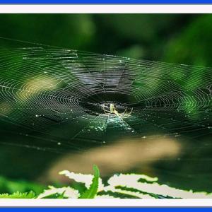 蜘蛛が紡ぐ華麗な巣