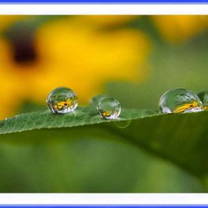 水玉に咲く花