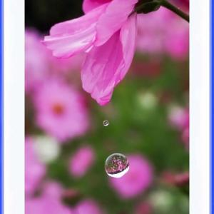 滴の中の花風景