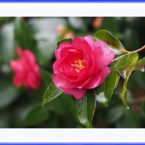 寒さに負けずに咲くお花