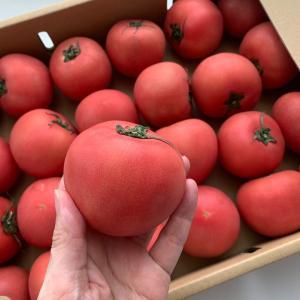 【岐阜産トマトでおいしくダイエット!】