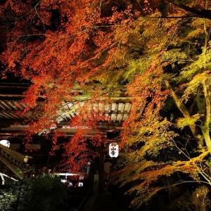 藤原道長が和歌を詠んだ千年後、満月を眺めた石山寺での紅葉ライトアップ(あたら夜もみじ)