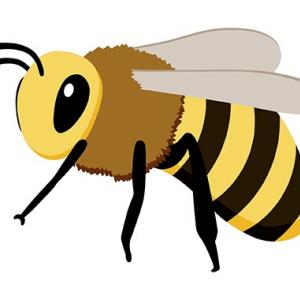 蜂は幸運の象徴(明日、皆様の願い宇宙へ届けます!)