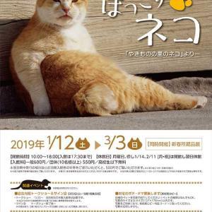 ネコの写真展
