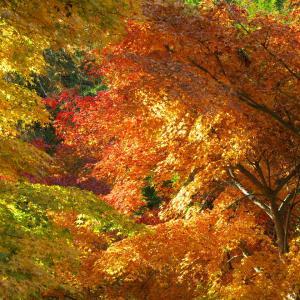 瓦屋禅寺の紅葉