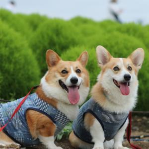 ☆ひたち海浜公園☆2019夏ライトアップ【後編】