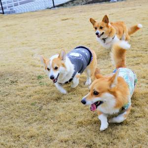 ☆Route 51 Field ドッグラン☆【後編】