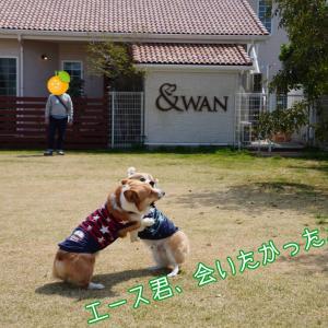 ☆&WAN☆【延髄斬り編】