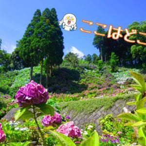 ☆服部農園あじさい屋敷☆【梅雨の合間に】