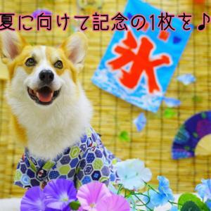 ☆スタジオアモ夏向けフォト☆【パートⅡ】