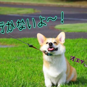 ☆コギスト☆