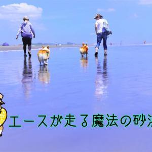 ☆マジックビーチ☆