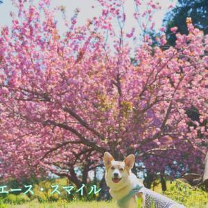 ☆高崎自然の森公園☆【後編】