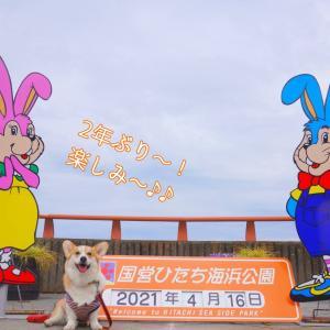 ☆ひたち海浜公園☆【2021年:序章】