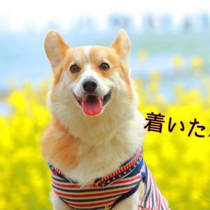 ☆ひたち海浜公園☆【2021年:青い衝撃!】